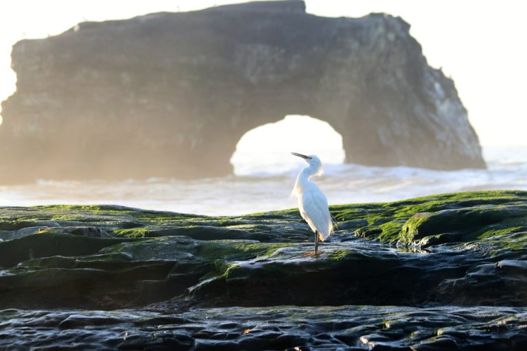 Molly McCorkell Natural Bridges Save Our Shores