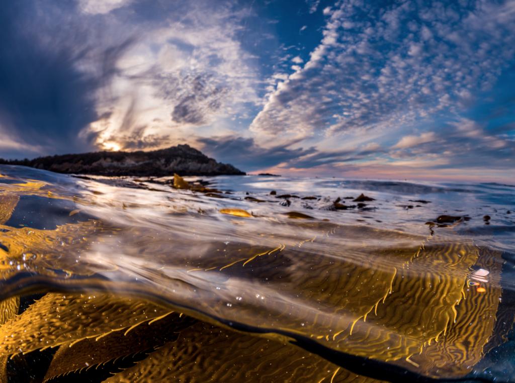 Patrick Webster Kelp Save Our Shores