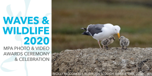 Waves & Wildlife 2020 — Virtual Awards Ceremony & Celebration @ Online